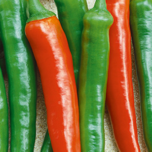 peppers-hot-sapporo-hot