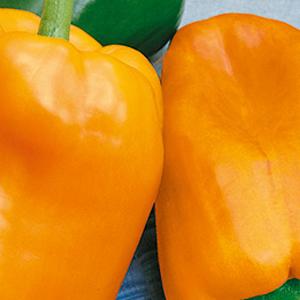 peppers-sweet-glow