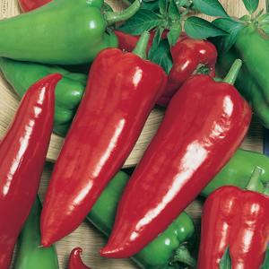 Crimson-Hot
