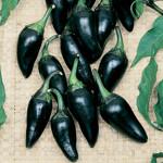 Hungarian Black