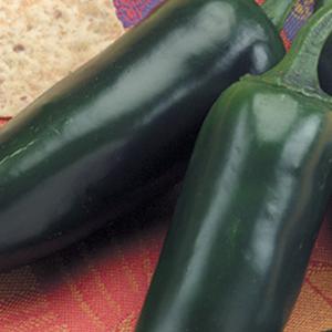 Pepper-Hot-Jalapeno-Goliath