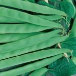 Beans Italian Bush