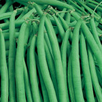 Beans Maxibel