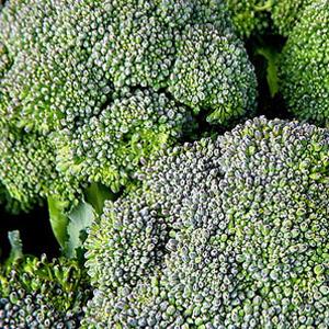 Broccoli Blue Wind
