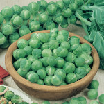Brussel Sprouts Nautic