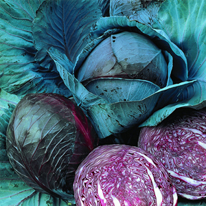 Cabbage Marner Lagerrot