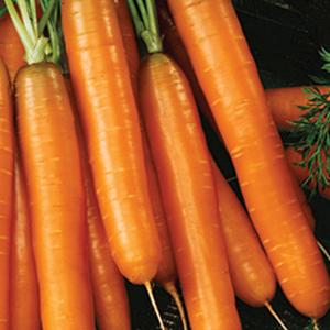 Carrots Little Fingers