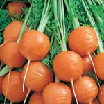 Carrots Parmex