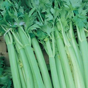 Celery Tango
