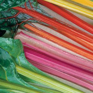 Chard Rainbow