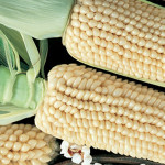 CornTom Thumb Popcorn