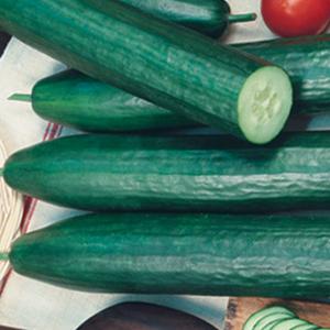 Cucumber Garden Sweet Burpless