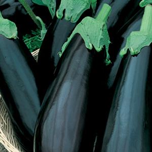 Eggplant Imperial Black Beauty