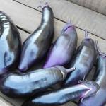 EggplantMillionaire