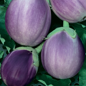 EggplantRosaBianca