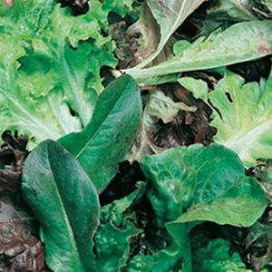 Salad Mix Mesclun