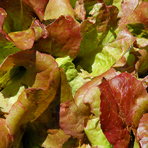 Lettuce Flame