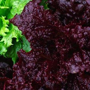 Lettuce Merlot