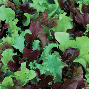 Lettuce Wild Garden Mix