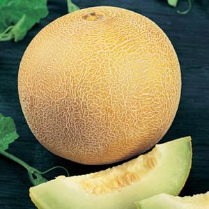 Melons Galia