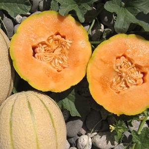 Melons Hannahs Choice Cantaloupe