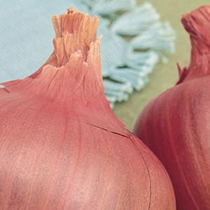 Onion Rosa di Milano