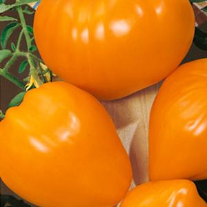 Orange Strawberry