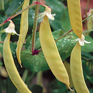 Peas Golden Sweet