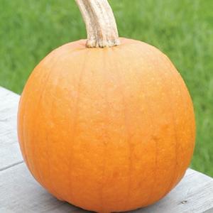 Pumpkin Baby Pam