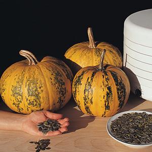 Pumpkin Kakai
