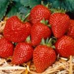 StrawberryElan