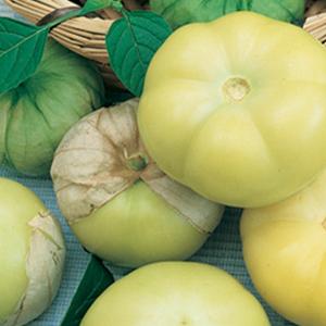 Tomatillo Mexican Strain
