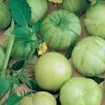 TomatilloToma Verde