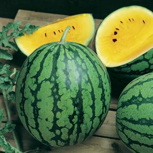 Watermelon Yellow Icebox