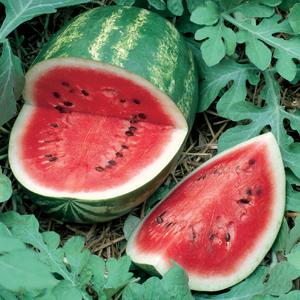 Watermelon Sweet Beauty