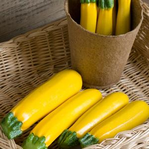 Zucchini Goldy