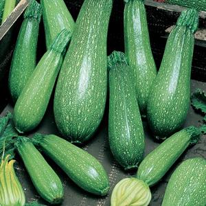 ZucchiniMagda