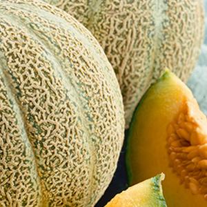 melons-minnesota-midget
