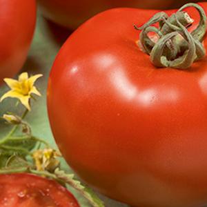 tomato-fuzzy-bomb
