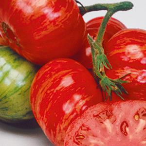 tomato-vintage-wine