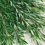 Rosemary Barbeque