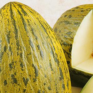 melons-lambkin