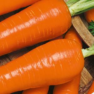 Carrots-Kuroda