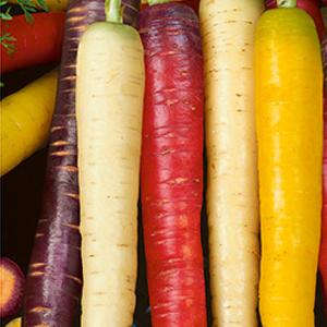 Carrots-Rainbow-Mix
