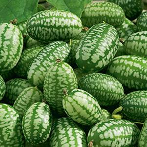 Gherkin-Mexican-Sour