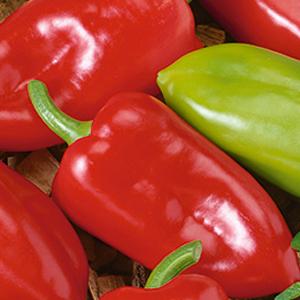 Peppers-Kapello