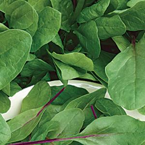 Spinach-Bourdeaux