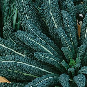 Kale-Black-Magic