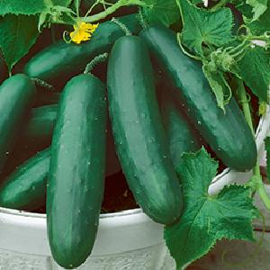 cucumber-spacemaster